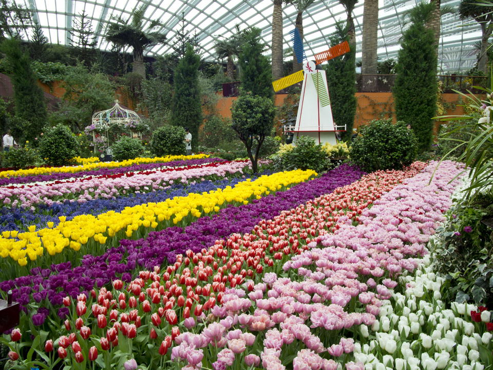 gardens by the bay having a tulip festival